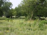 Wheeler Park summer prairie