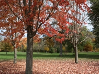Island Park fall
