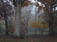 Sandhom Woods fog