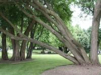 Washburn Park