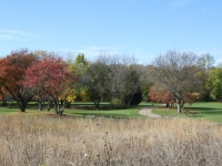 Wheeler Park fall prairie