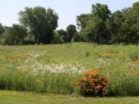 Wheeler Park prairie